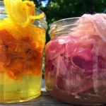 Solar Dyeing with Esther and Shirley: Apr. 25
